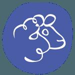 laine mérinos biologique