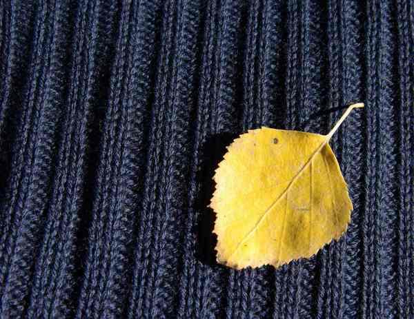 tricot-laine-merinos-bio-harfmann-bleu